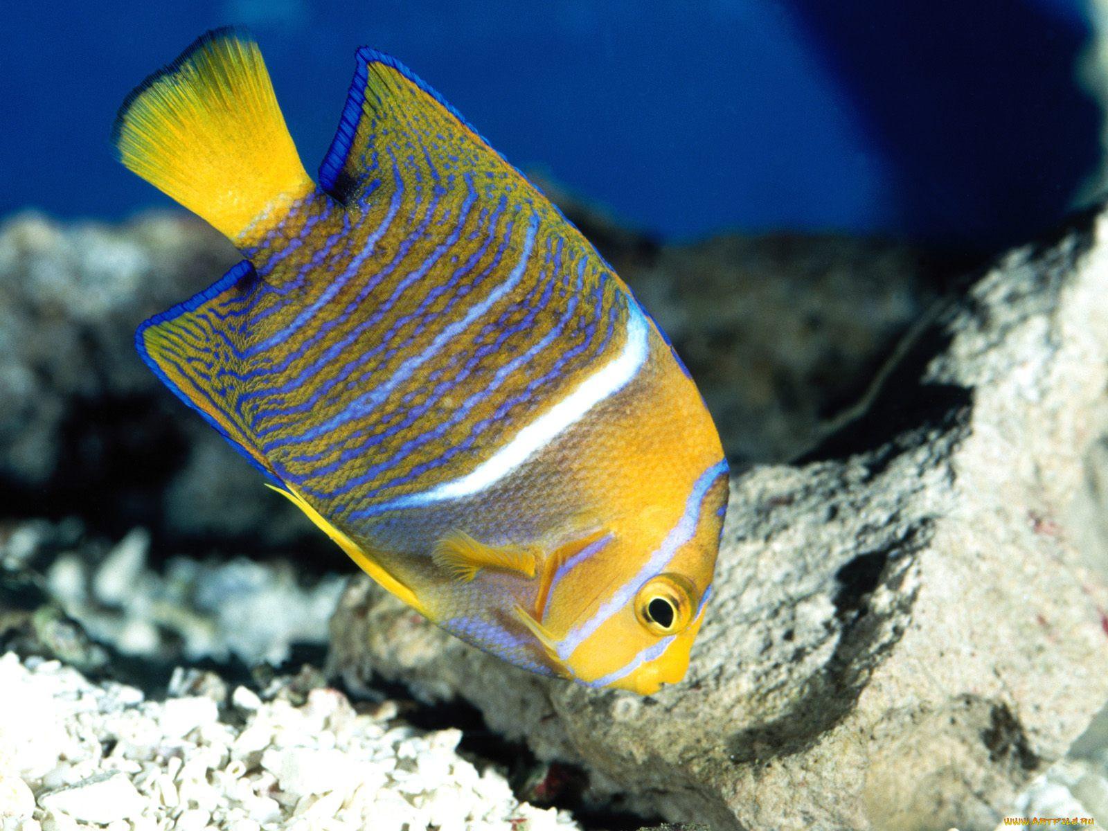 Картинки про рыбки